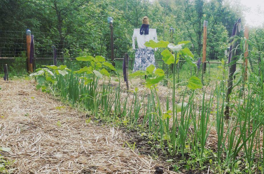 Ogród – kwestia sporna
