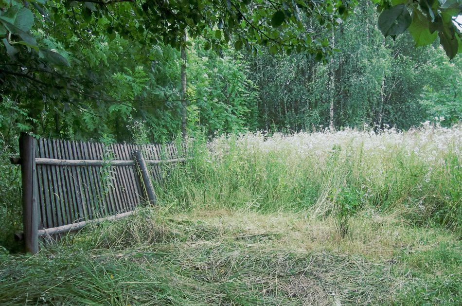 Zarośnięty ogród